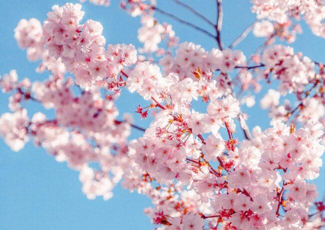Coisas que talvez você não saiba sobre a Primavera